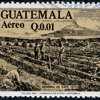 Guatemala Huehuetenango Huixoc RFA - Subscription