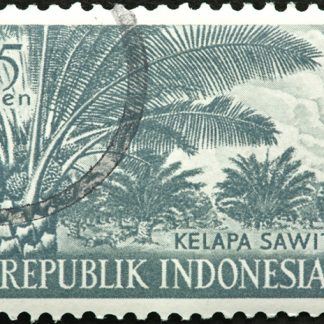 Sumatra Mandheling Aceh Ketiara bold - Subscription