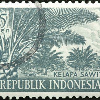 Sumatra Mandheling Aceh Ketiara bold